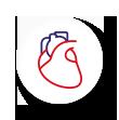 układ krążenia i serca